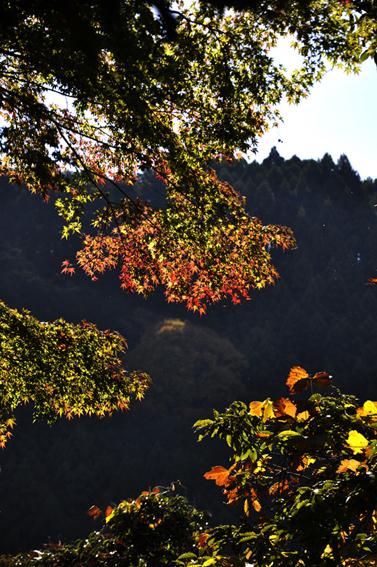 tanzawa2.jpg