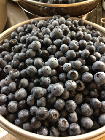 bluberry.jpg