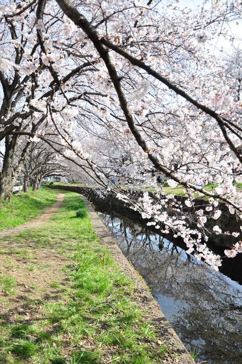hikijigawa_1.jpg