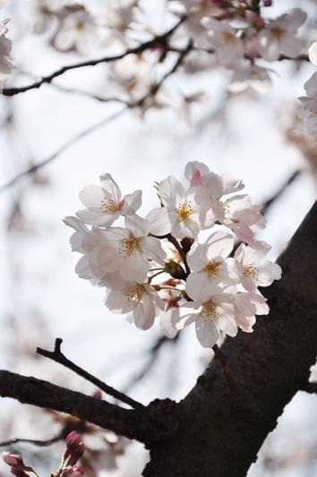 hikijigawa_2.jpg